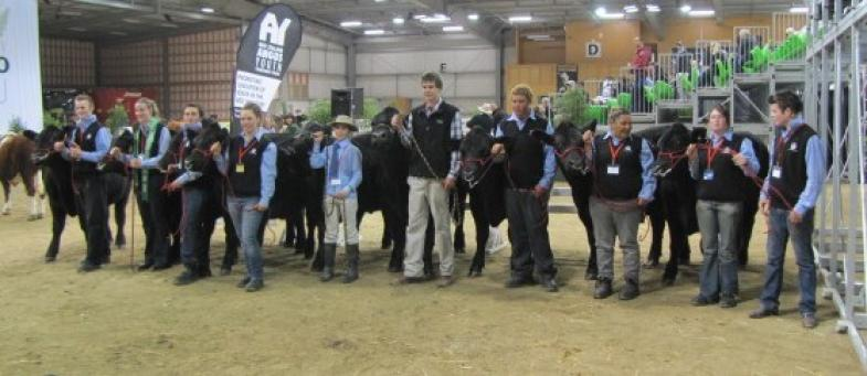 An impressive line up of Angus steers for the Future Beef competition